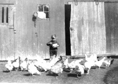 Douglas  feeding the chickens