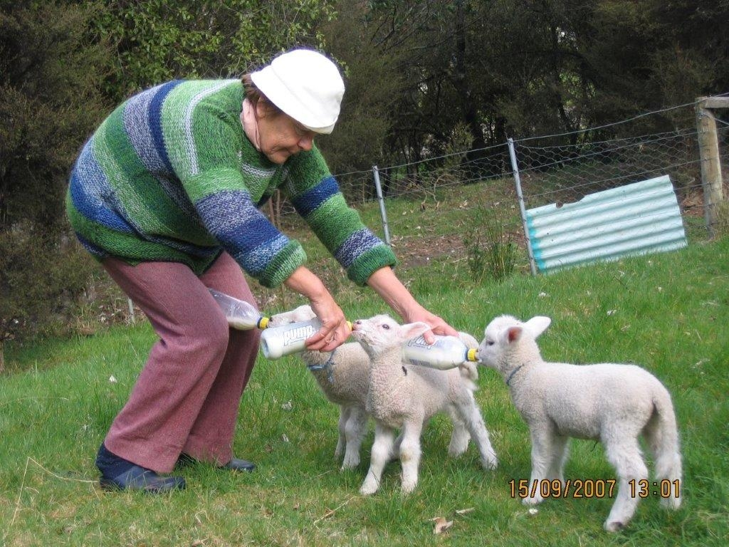 Ela feeding three  lambs at once, with two bottles in her hands and a third between her knees