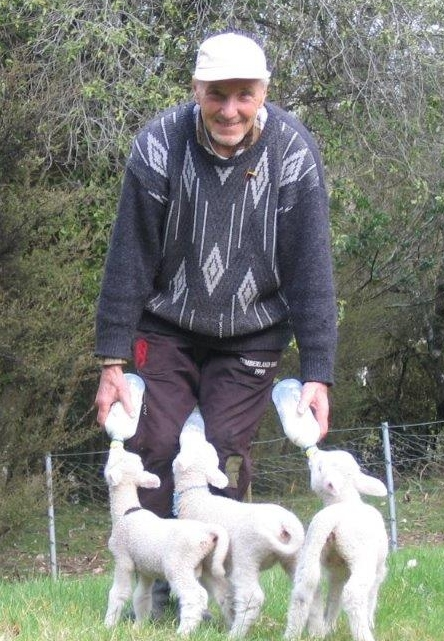 Bronek feeding the  same lambs