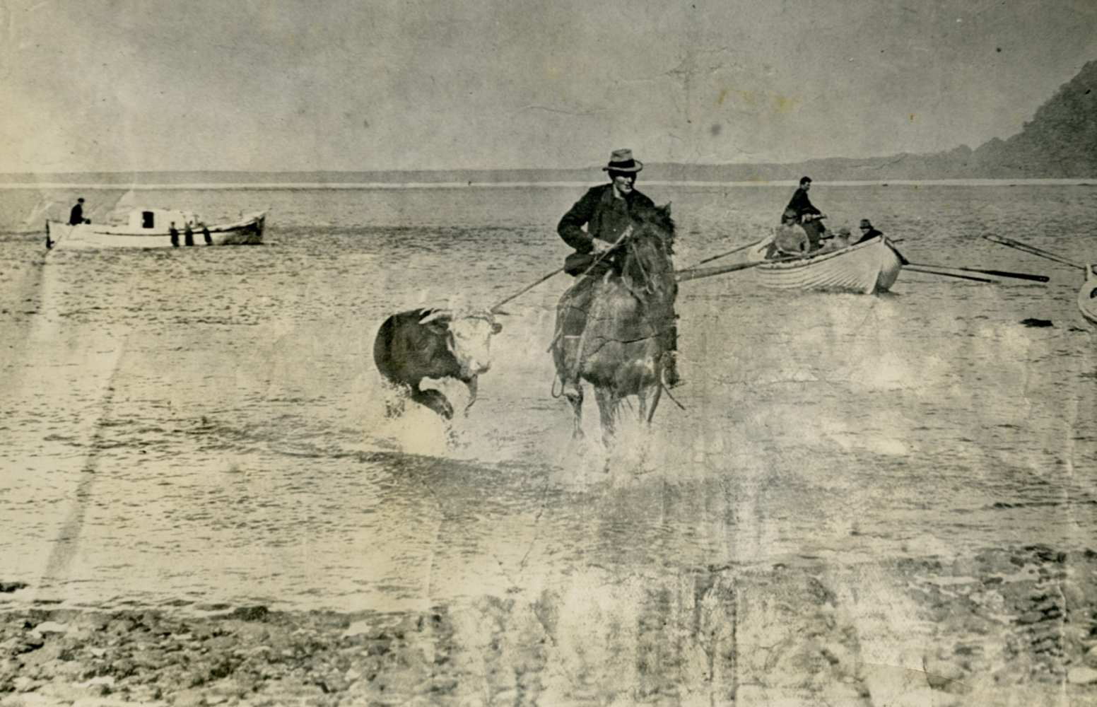 Rider on a horse  leading a bull through the waves at Jackson's Bay