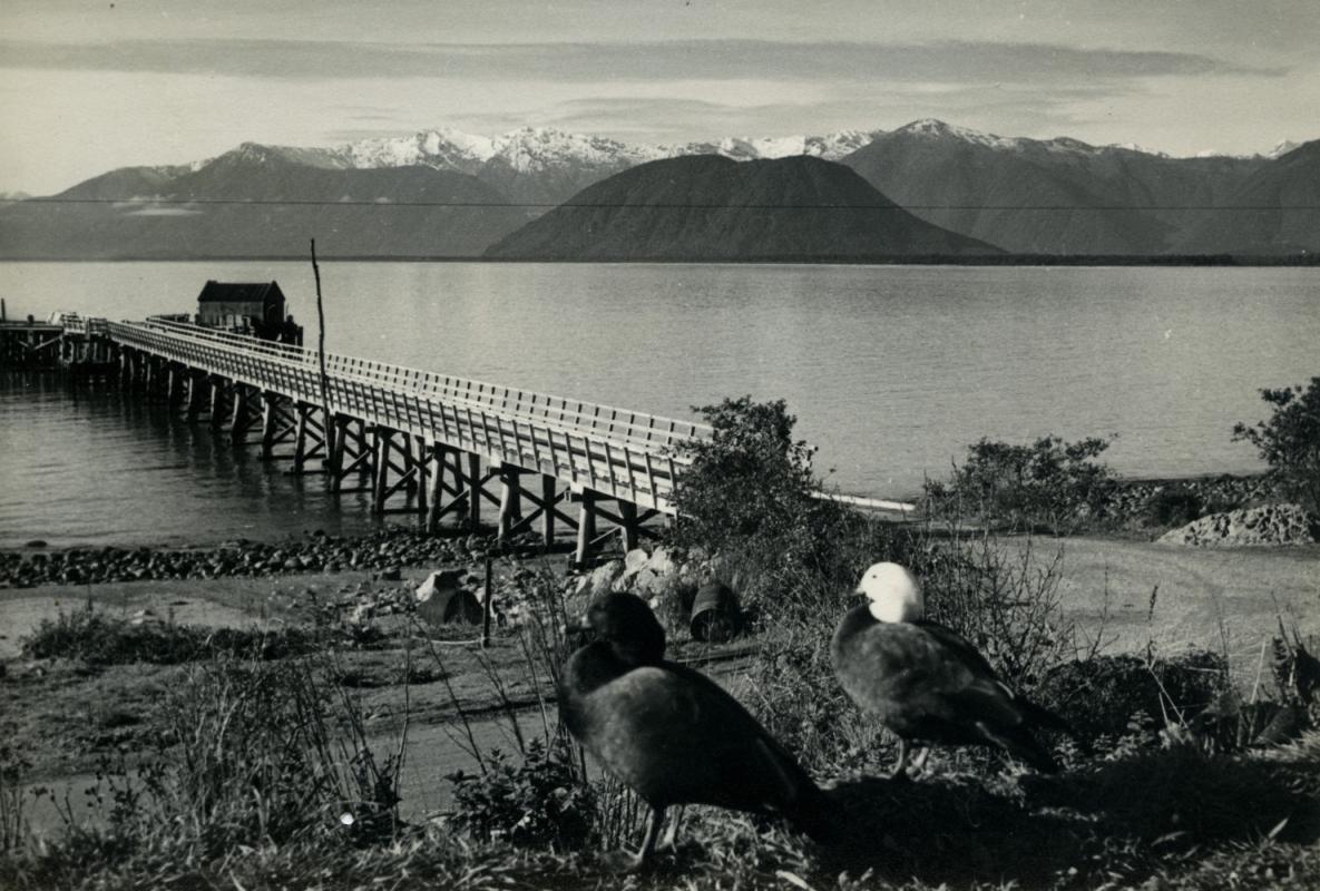 Jackson Bay jetty circa  1960