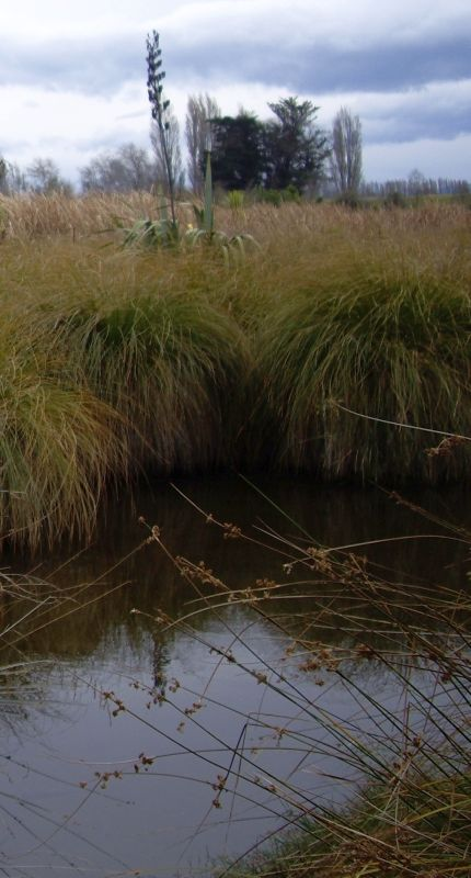 Image of carex and water from  Ōtukaikino Reserve