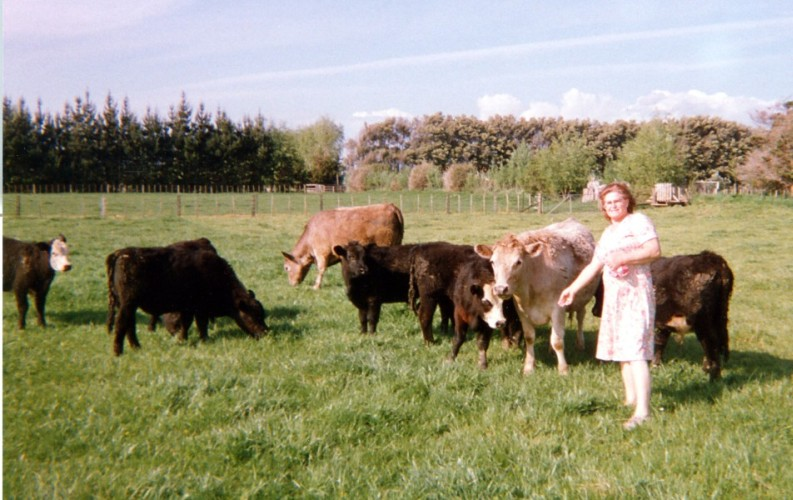 Wisia Watkins  feeding the heifers on their Levin farm