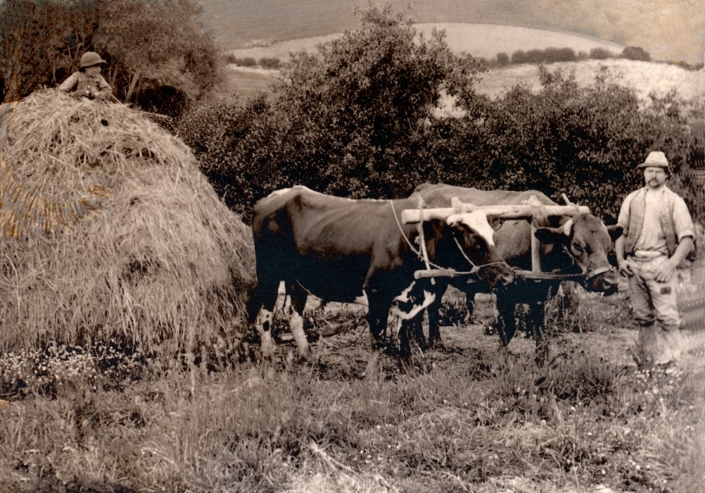Haystack with child  on top, his oxen, and Joseph on the far right.