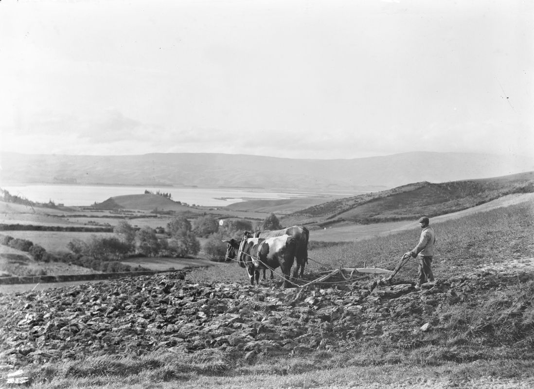 Joseph Bungard   ploughing. Lake Waihola in background.