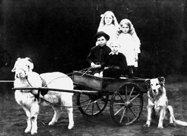 Four  Schimanski children in a cart pulled by Billy the goat