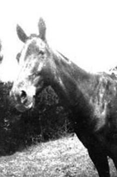 Maireita   the horse