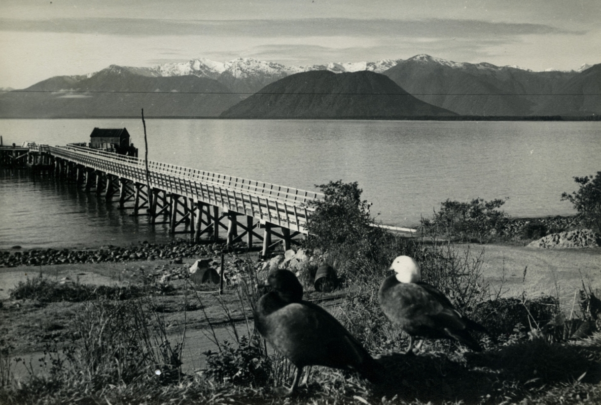 Jackson Bay jetty circa  1960