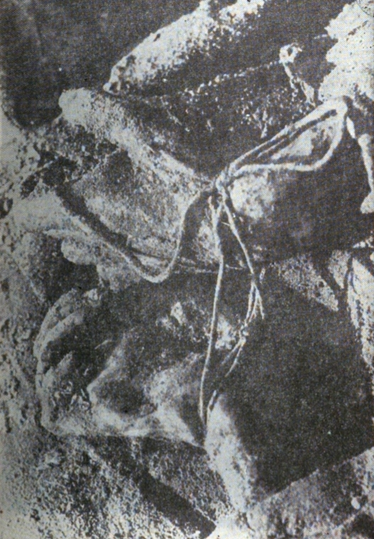 a grainy, black and  white image of skeletal hands tied with cord