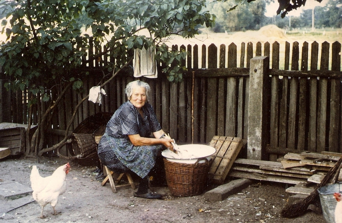 A handsome woman with  white hair and in a blue dress, smiles to the camera as she sits under a tree against the fence, plucking a white chicken  over a white bowl resting on a basket. Another white chicken looks on, and another one is just visible in the front right.
