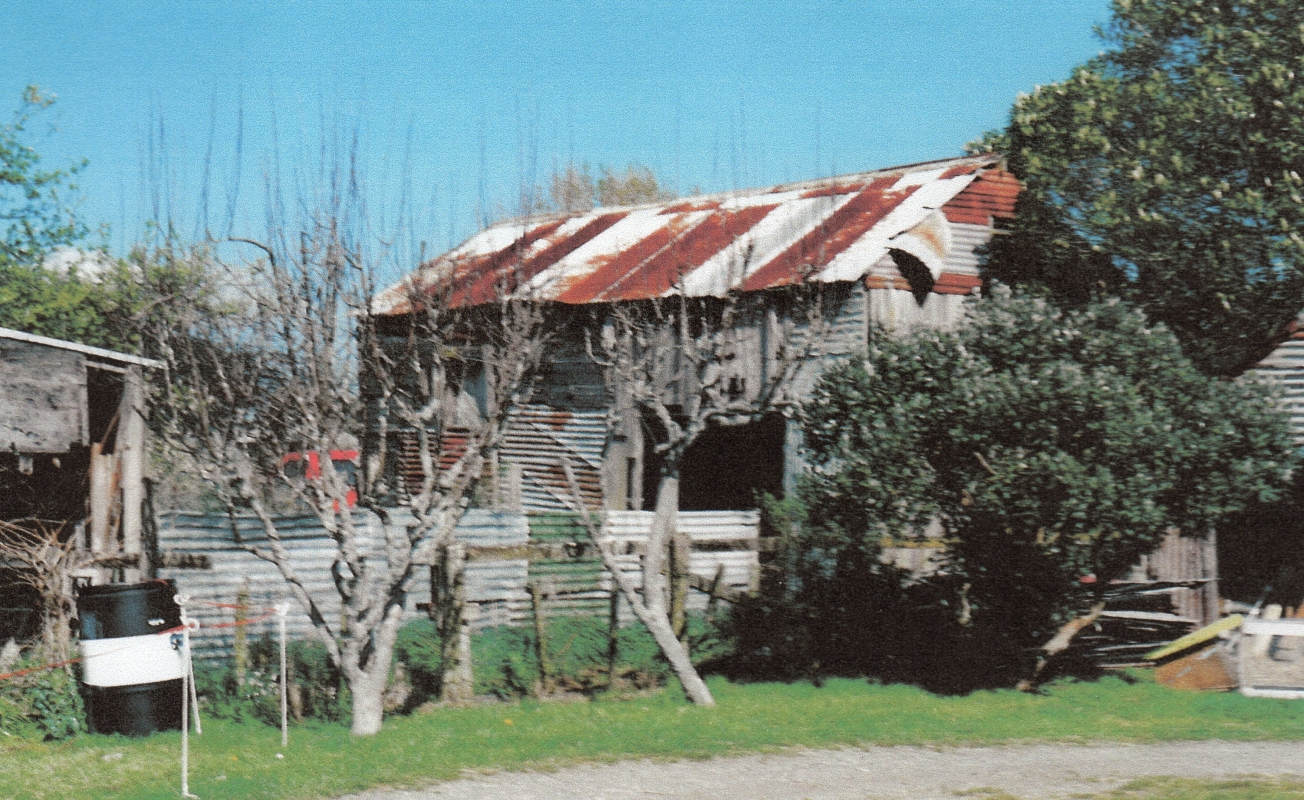 The old corrugated  iron barn, rusting roof, in a disheveled yard, behind a corrugated iron fence, in front of which are two leafless fruit  trees
