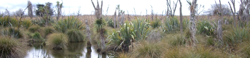Scene of swamp in Ōtukaikino  Reserve