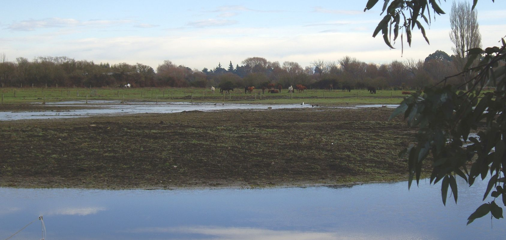 View of a  boggy paddock, pools in the foreground and horses grazing in the distance.