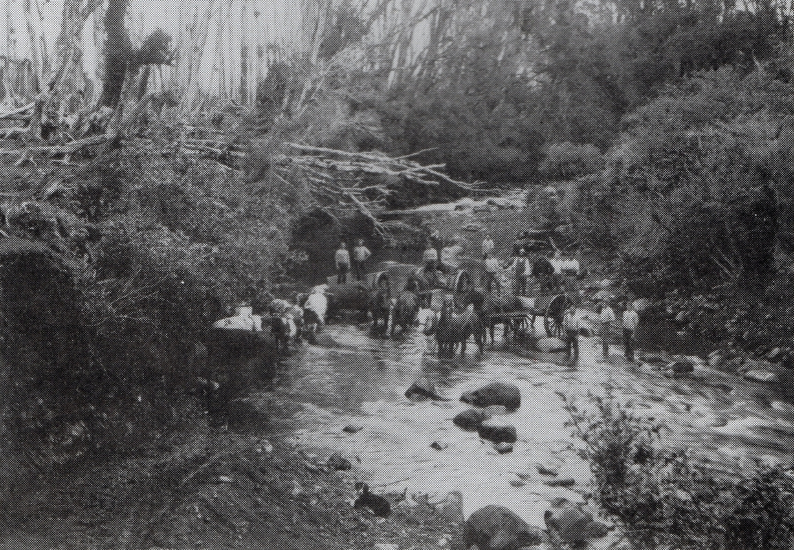 Black and white  photograph of bullock and horse teams, and 12 men, in a rocky part of the river.