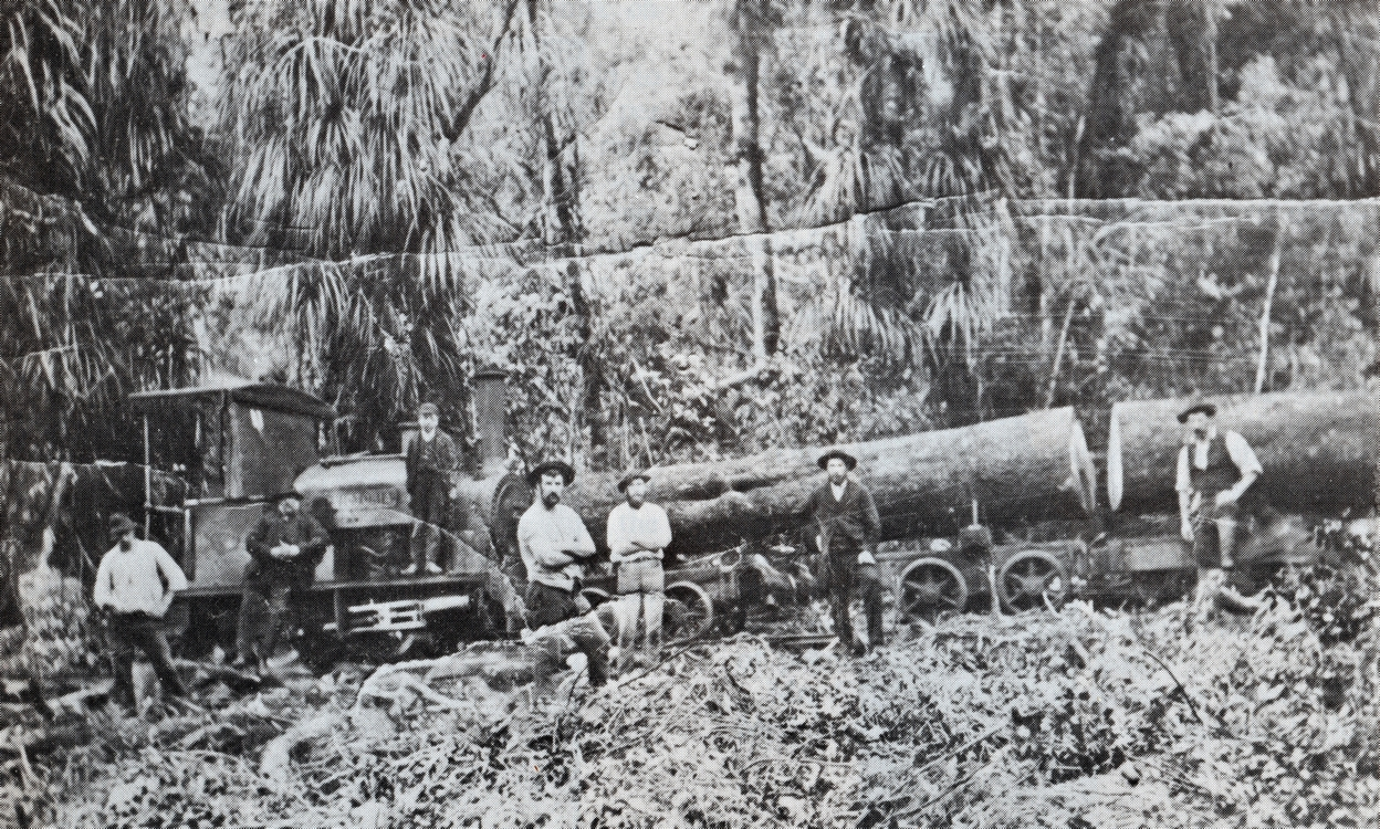 Seven men standing in front  of an engine pushing two logs at least a metre in diameter. A younger lad stands on the engine. Cleared bush in the front,  several cordylines at the back.