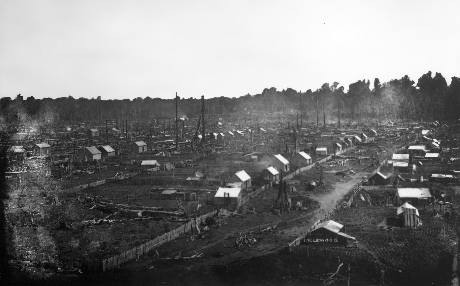 A continuation of the  previous photograph of early Inglewood. Two rows of little huts from the foreground line the stump-filled area between them.  The only reason one realised this will be a 'road' is because of the fencing. SOme really tall tree stumps between the  foreground huts, and others farther back.