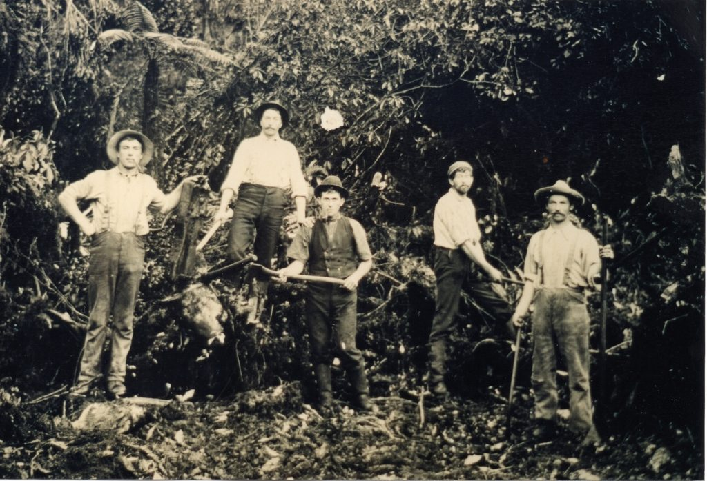 Five young men pause in a clearing in extremely dense bush. They are all holding implements.